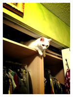 White Kitty Stuck at Top of Closet